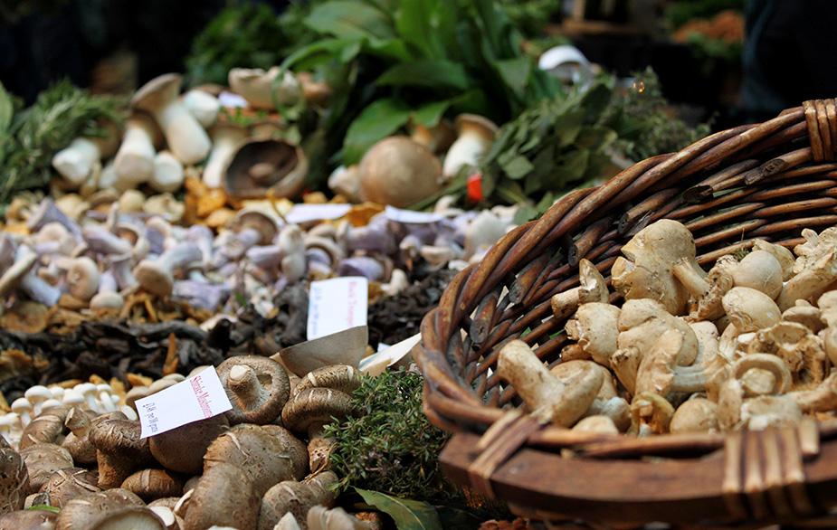 Wild mushroom market